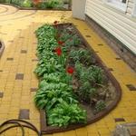 Чисть Укладка тротуарной плитки,  брусчатки от 50м2